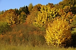 Herbstspaziergang 10-2018_18