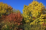 Herbstspaziergang 10-2018_19