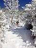 Winterspaziergang Febr._7