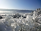 Winterspaziergang Febr.