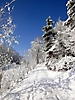 Winterspaziergang Febr._9