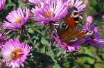 Schmetterlinge_1